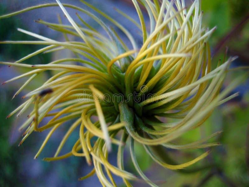 twisty roślinnych fotografia royalty free