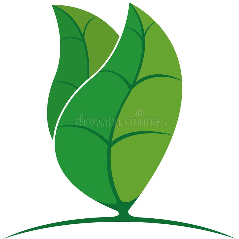 Two abstract leaves of a green tree on white background. Vector image vector illustration