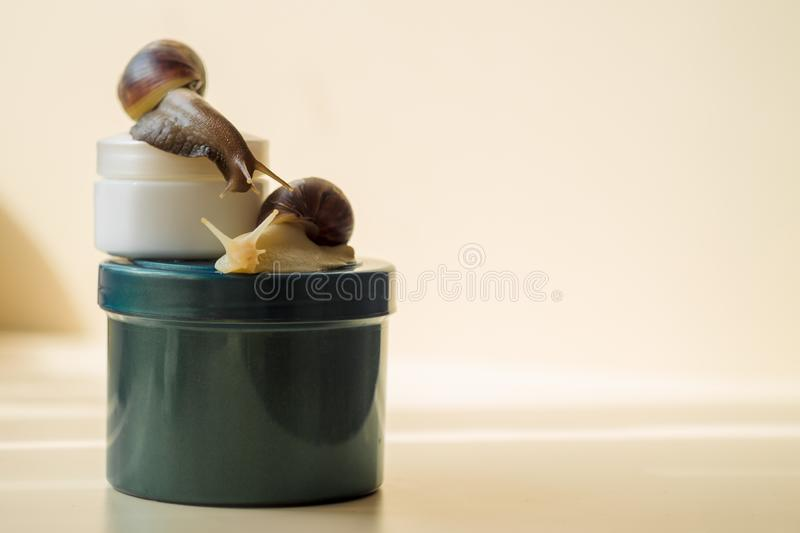 Two Achatina snails and cosmetics on the light background. Extreme close-up macro photography. Mollusks on the jars. Anti-aging. Slime. Selective fokus cream stock photo
