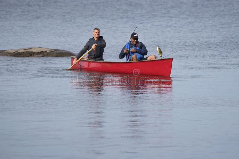 Catching a Small Mouth Bass from a Red Canoe on Georgian Bay. Two active fishermen on Georgian Bay near Christian Island catch a fish from a red kevlar canoe stock photo