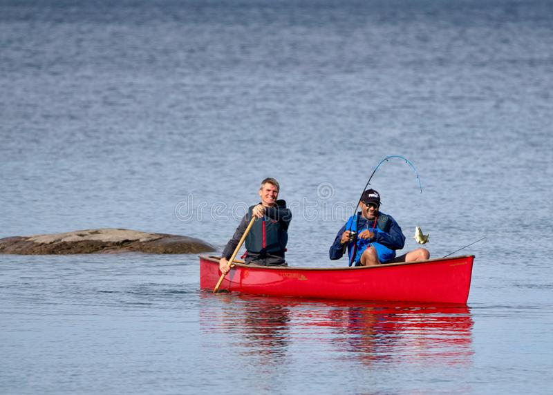 Catching a Small Mouth Bass from a Red Canoe on Georgian Bay. Two active fishermen on Georgian Bay near Christian Island catch a fish from a red kevlar canoe royalty free stock photography