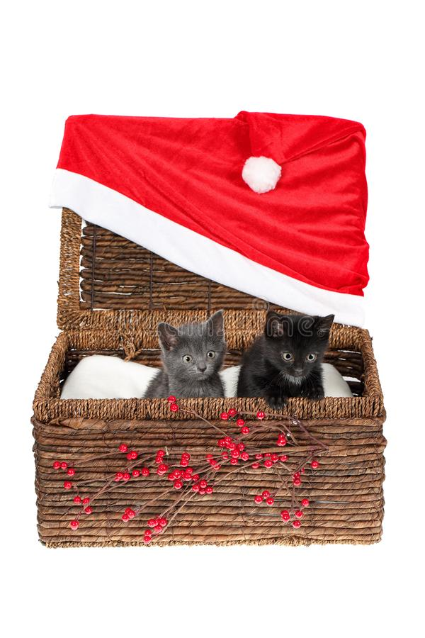 Two adorable baby cats in a wicker basket decorated with holly berry branches and huge Santa hat, isolated on white. Cute grey and stock images