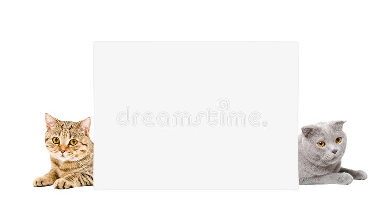 Two adorable cats lying behind a banner royalty free stock image