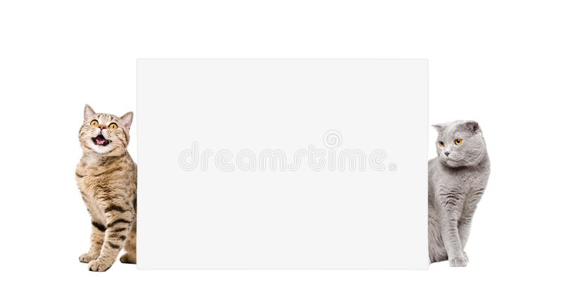Two adorable cats, sitting behind a banner royalty free stock photos