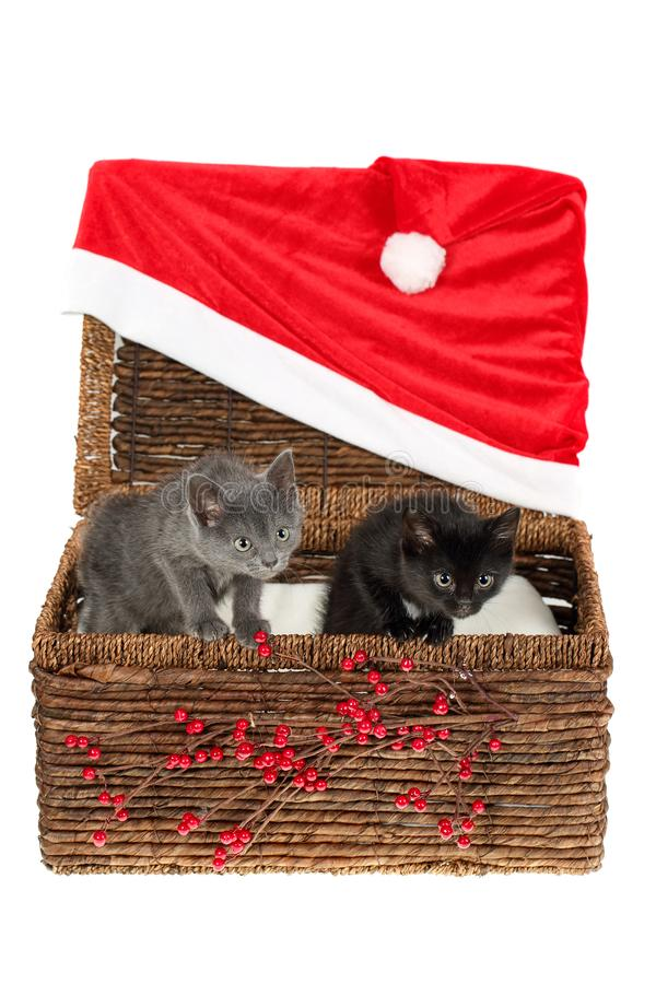 Two adorable, grey and black kittens peeping curiously out of a wicker basket with simple red Christmas decoration - holly berries royalty free stock photography
