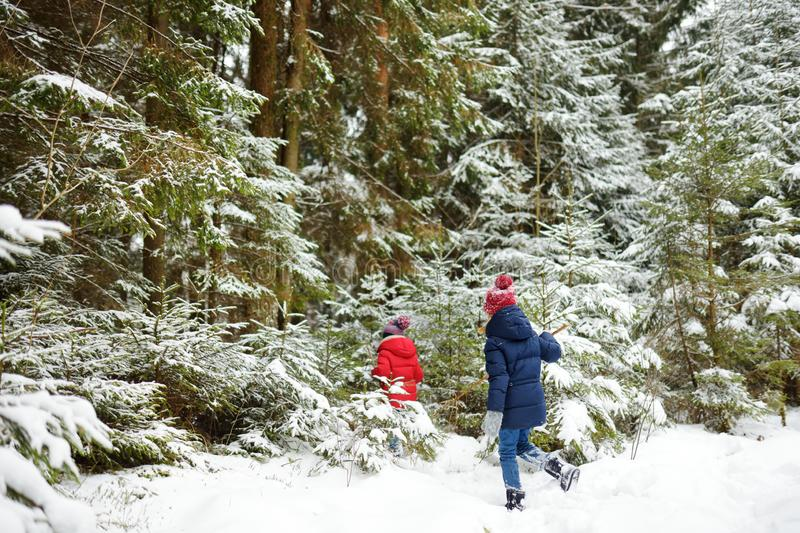 Two adorable little girls having fun together in beautiful winter forest. Beautiful sisters playing in a snow stock image