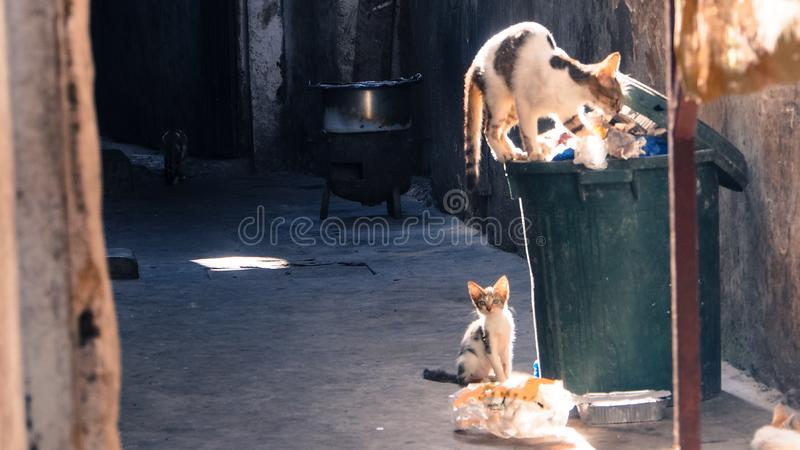 Alley cats looking for food in dustbin in Stonetown, Zanzibar. Two alley cats looking for food in a dustbin. Sunlight shines on the cat and bin, while the alley stock photo