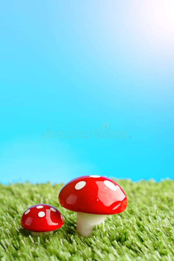 Two amanita mushroom in the meadow. Two amanita mushroom on green grass clearing royalty free stock image