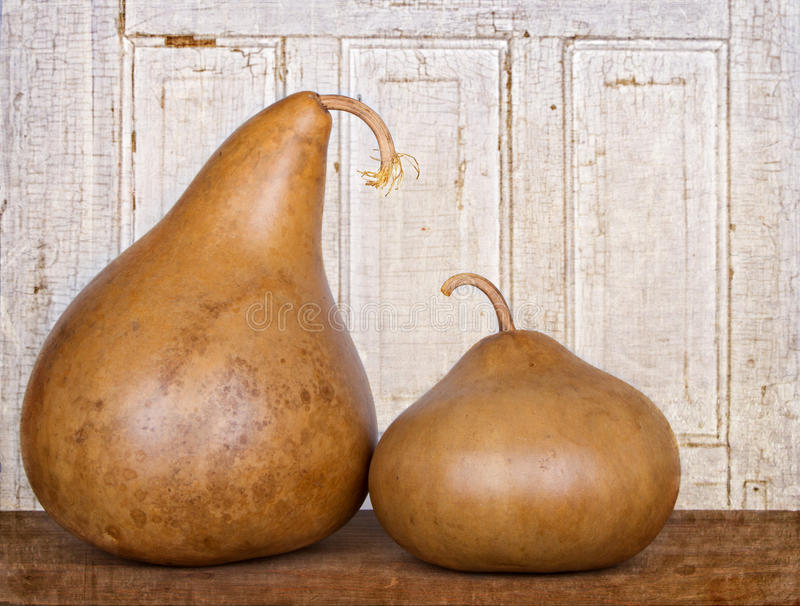 Download Two Amish Gourds Sitting On Wood Plank Stock Photo - Image: 25122360