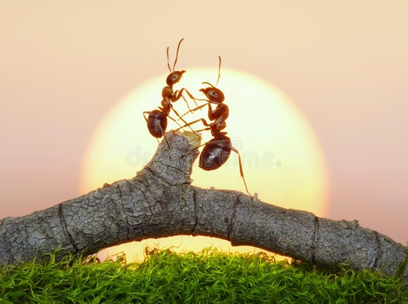 Two ants on sunset. Or sunrise royalty free stock image