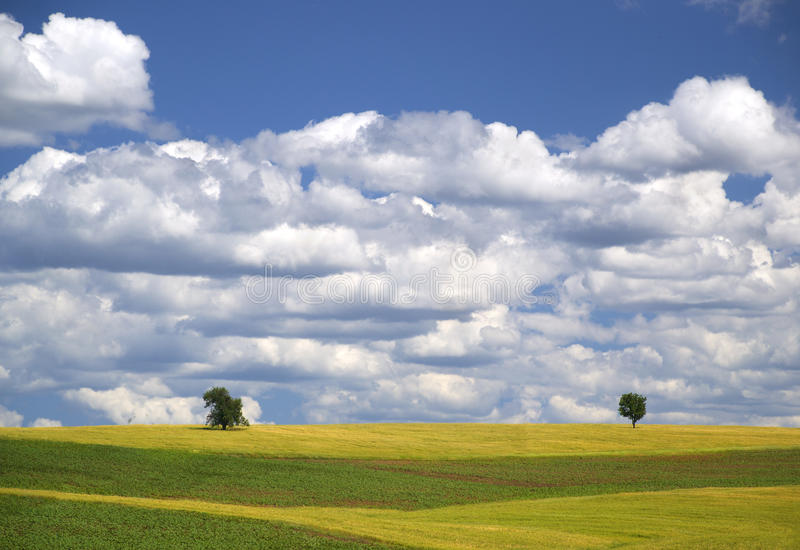 Two apart. Two trees standing apart in beautiful colorful fields of crops under white clouds and blues sky on a clear sunny day stock images