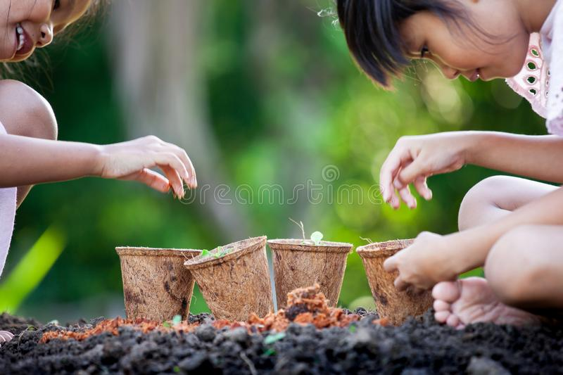 Two asian child girls planting young seedlings in recycle fiber pots together in the garden royalty free stock photography