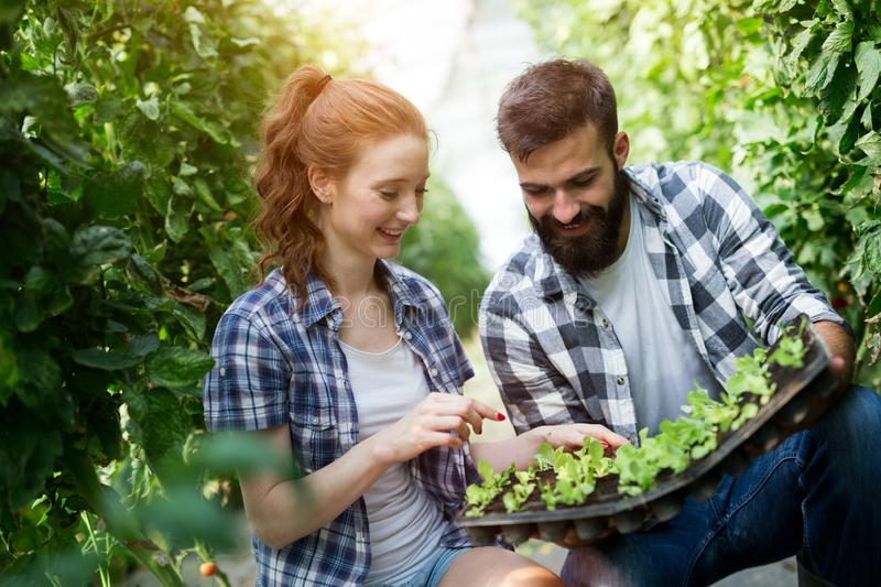 Two attractive young women working in greenhouse and planting seeds. royalty free stock images
