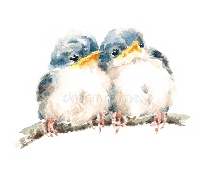 Two Baby Birds Sitting On The Branch Siblings Twins Family