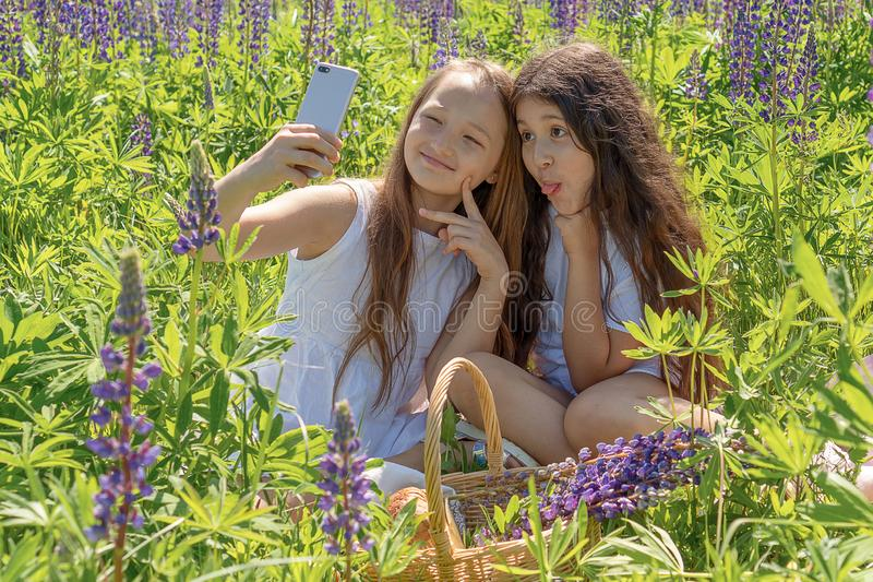 Two baby girls make selfie on a phone among flowers in a field on a sunny day. stock photo