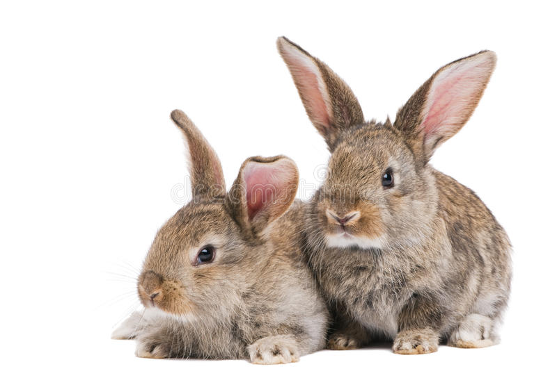 Two baby rabbits isolated on white royalty free stock photos