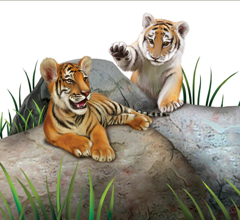 Two baby tigers playing on the rocks. Isolated Illustration on white background royalty free illustration
