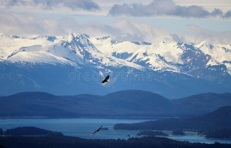 Two bald eagles soaring over trees with snow capped mountains in Alaska. Two bald eagles soaring over trees with snow capped mountains and ocean inlet in Alaska royalty free stock images