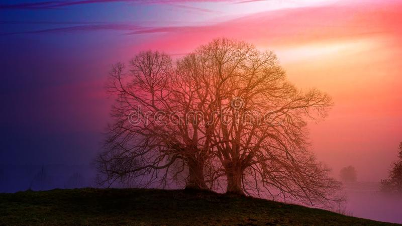 Two Bare Trees Beside Each Other during Sunset stock images