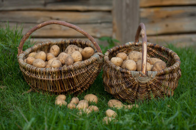 Two baskets of potatoes royalty free stock image