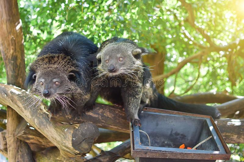Two bears are looking for foods stock photography