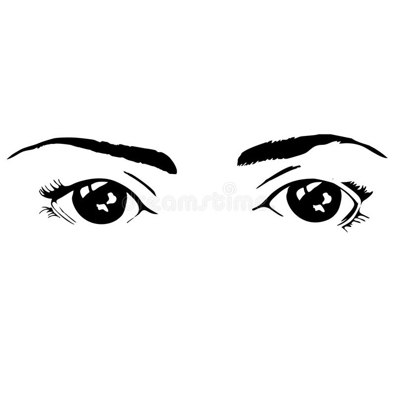 Two beatiful isolated black eyes with eyebrows of female royalty free stock photography