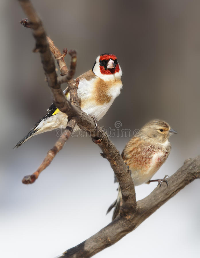 Two beautiful birds. At the branch stock image