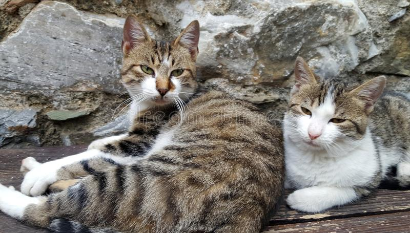 Two cats resting on the bench stock images