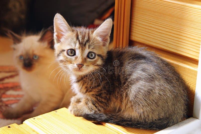 Two beautiful kittens. stock photography