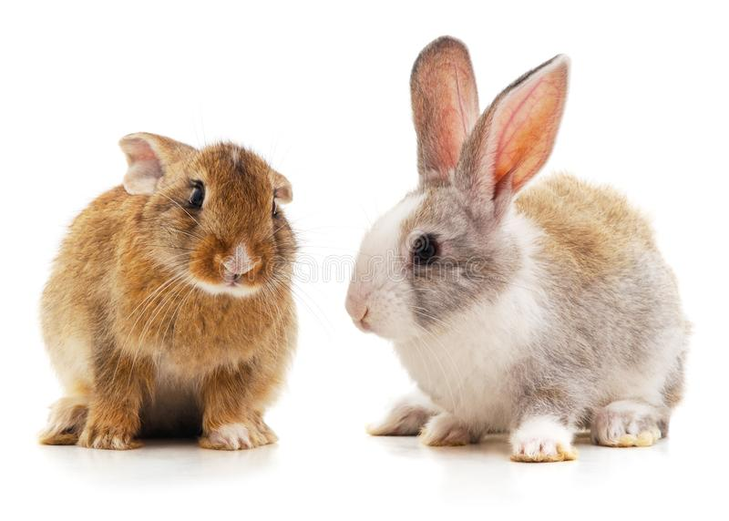 Two beautiful rabbits. Isolated on a white background royalty free stock photos
