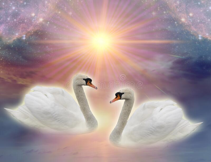 Two beautiful swans on lake over divine sky, sun and stars stock images