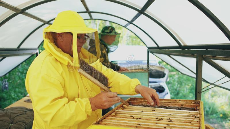 Two beekeepers checking frames and harvesting honey while working in apiary on summer day stock photography