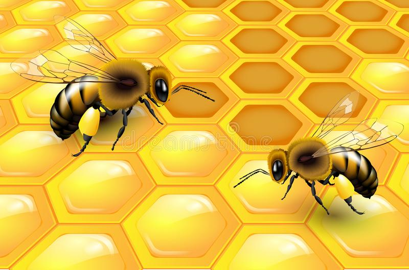 Two bees on honeycomb. Vector illustration royalty free illustration