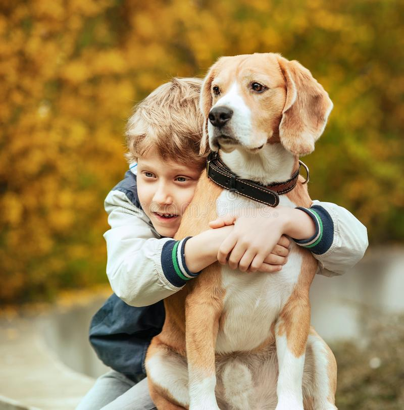 Two best freinds portrait - little boy hugs beagle dog stock images