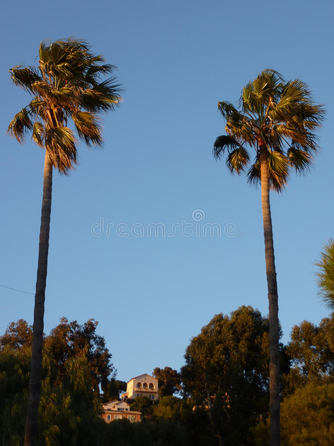 Download Two Big Palm Trees By Sunset Stock Photo - Image: 14341466