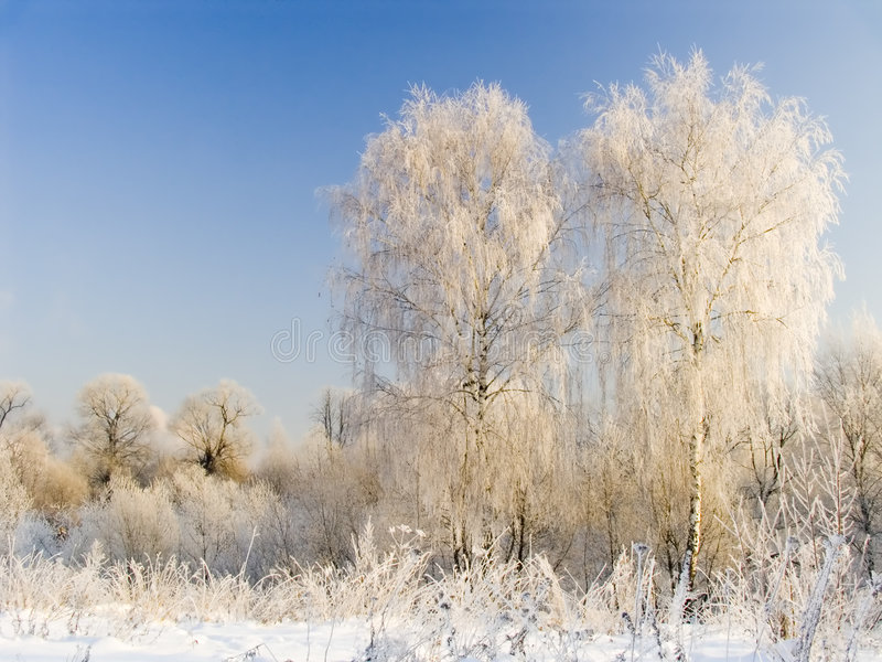 Download Two Birches In Hoarfrost Stock Photography - Image: 1417042