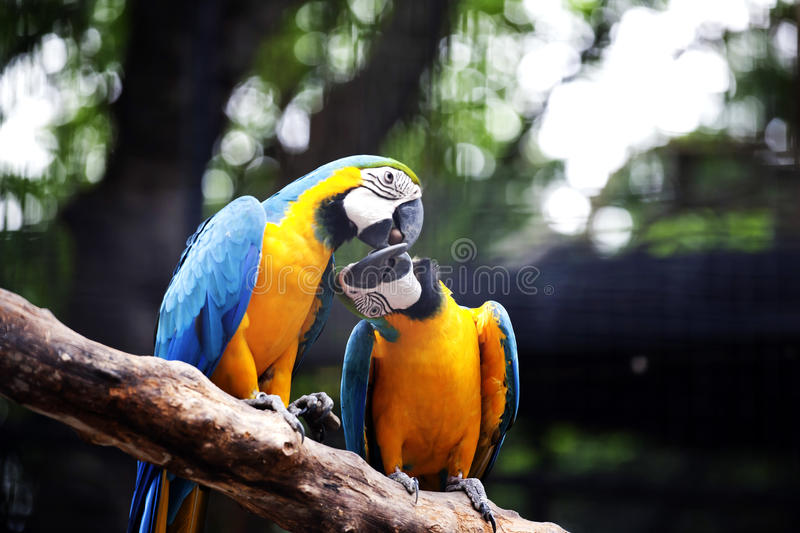 Two birds. Birds birds birds animal menagerie branch outdoors wait upon rear livestock in pens lovable view and admire royalty free stock images