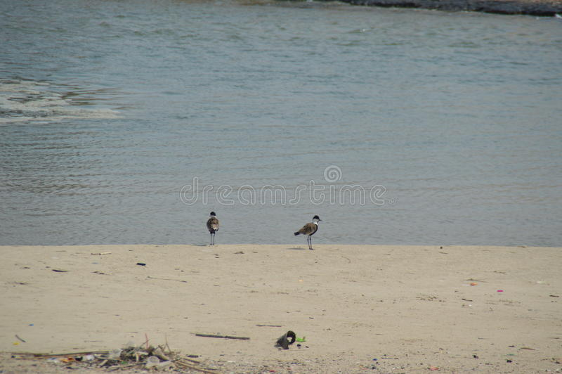 Two birds on the beach stock image