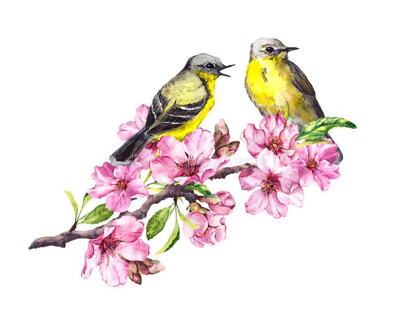 Two birds on blossom apple, cherry branch in pink flowers. Watercolor flowering tree with bird couple royalty free illustration