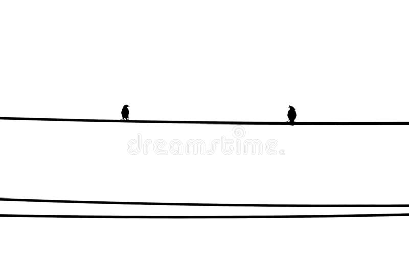 Two birds standing on the wire and look at each other. Black and white minimal background. royalty free stock images