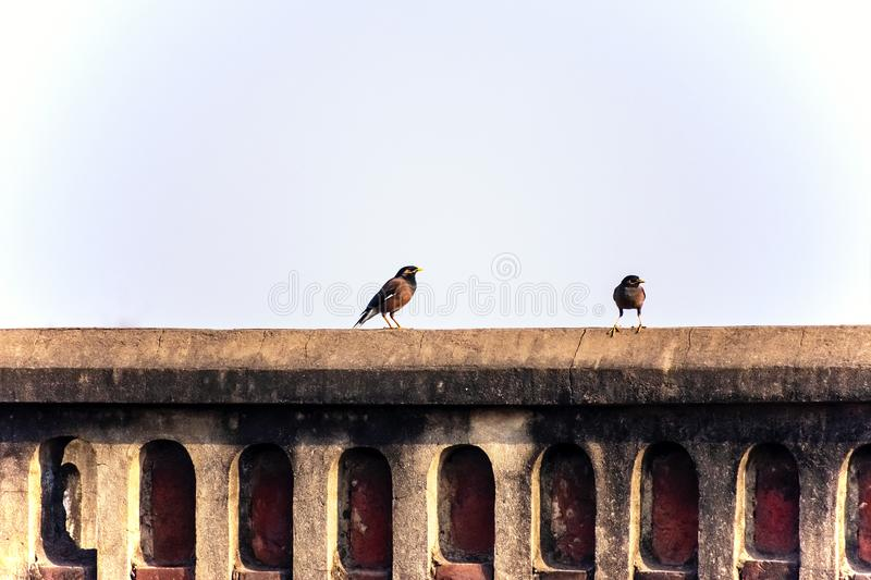 To birds on a ledge of an old house. Terrace under the blue sky royalty free stock image