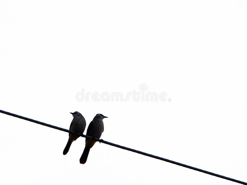 Two birds on the wire stock image. Image of angle, couple - 49415311