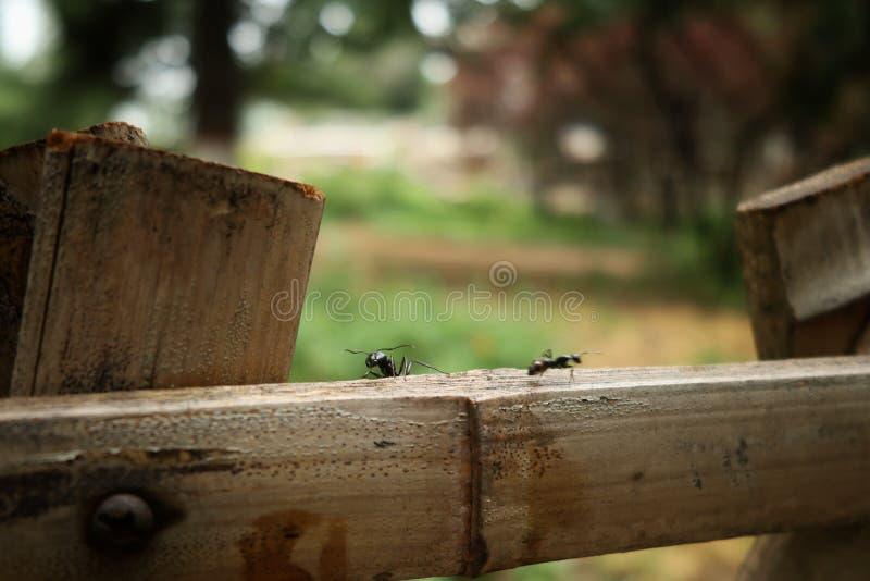 Two black ants stock photo