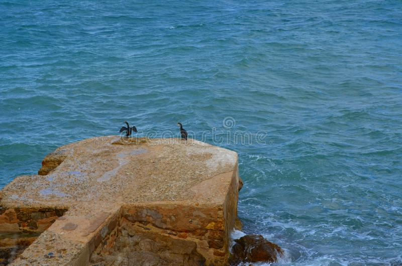 Two black birds relaxing on rock in the sea. Two black birds relaxing on rock in the blu sea royalty free stock images