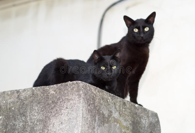 Two black cats stock image