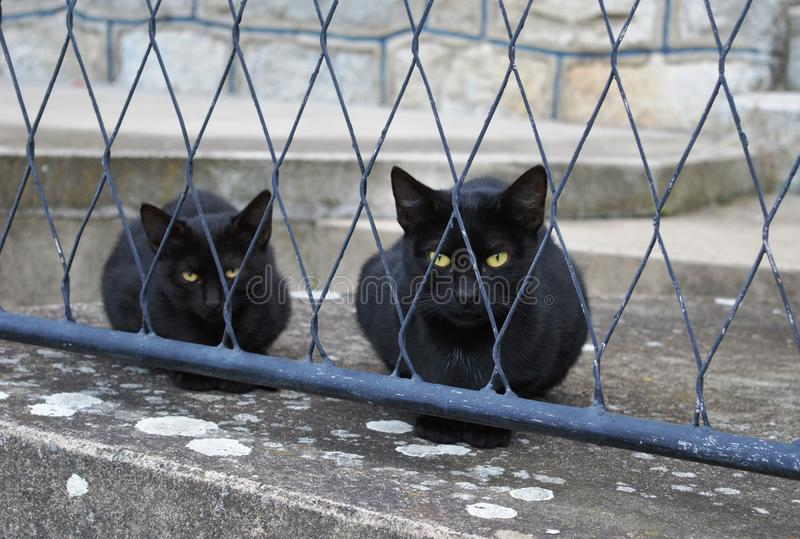 Two black cats. Behind the fence royalty free stock image