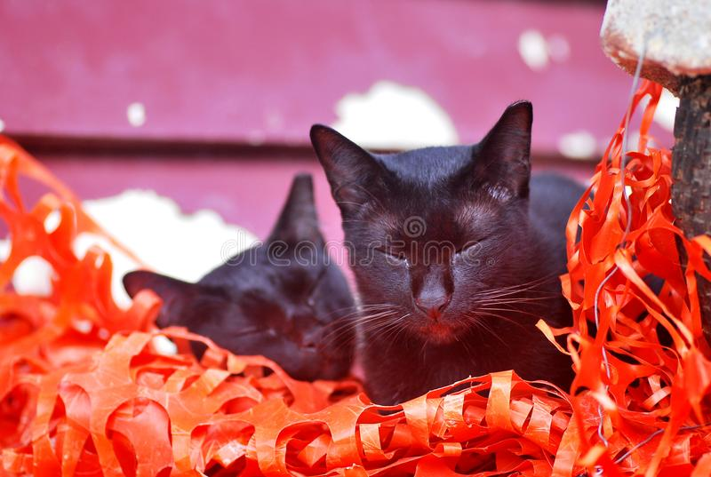 Two black cats with eyes closed. A photo taken on two jet black cats with their eyes closed royalty free stock images