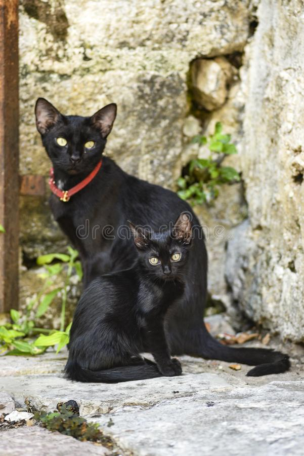 Two black cats, in Kotor, Montenegro.  royalty free stock image