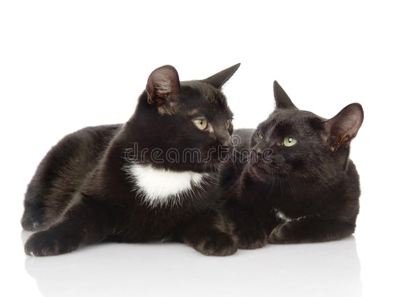 Two black cats looking at each other. isolated on white background royalty free stock photos
