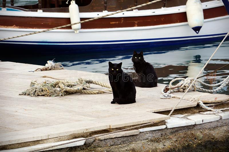Twin black cats on a pier. Two black cats posing on a pier while they are wainng the return of the fishermen royalty free stock photo